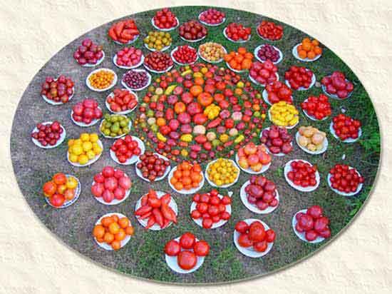 mandala-tomatoes1.jpg
