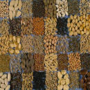 semillas.jpg