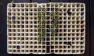 planta-horticola-web